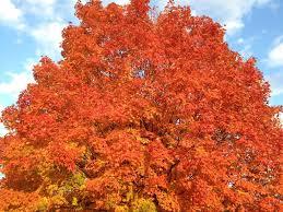 Pumpkin Patch Winchester Virginia by 5 Favorite Ways To Enjoy Fall In Fairfax County Virginia Fun In
