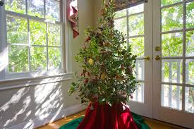 Christmas Tree Farm Lincoln Nebraska by Christmas Tree Options Cut Or Container Grown Houston Chronicle