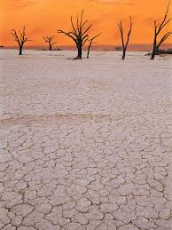 Earth Floor Biomes Desert by Desert Threats And Endangered Species National Geographic
