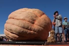 Pumpkin Patch Boulder by Half Moon Bay Ca Plumpest Pumpkin 2 058 Pound Gourd Sets Record