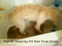 Bathtub Drain Clogged With Dirt by Tips For Removing Pet Hair From Drains 2 Jpg