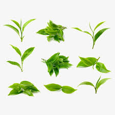 Tea Leaves Leaf Green PNG Image And Clipart