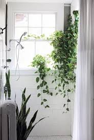 Best Plant For Windowless Bathroom by 96 Best Bathroom Plants Images On Pinterest Bathroom Plants