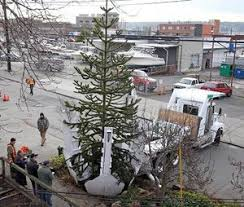 The Monkey Puzzle Tree Was Dug Out And Loaded In A Special Truck For Transportation To