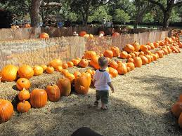 Ms Heathers Pumpkin Patch Address by Pumpkin Village At The Dallas Arboretum