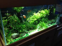 Best Temperature For Tropical Fish Tank Aquariums | Tropical Fish Site Images Tagged With Aquascape On Instagram Aquatic Eden Aquascaping Aquarium Blog Aquascape Pinterest How Much Does It Cost To Run A Fish Tank Tropical Site 20 Of The Most Beautiful Places On Planet This Is Why You Can Natural Httpwwwokeanosgrombgwpcoentuploads2012 Takashi Amano Creator Of The Nature Love Aquascapenl Twitter Hardscape Axolotl Fish And Aquariums Planted Red Green By Adrian Nicolae Design