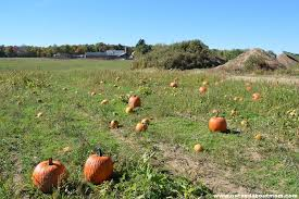 Pumpkin Patch Glastonbury Ct by Burke Ridge Farms Hayride To The Pumpkin Patch