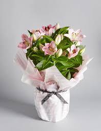 Good Plants For Bathrooms Nz by Indoor Plants House Plants U0026 Orchid Pots M U0026s