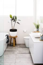 Plants For Bathrooms With No Light by Best Bathroom Plants Best 25 Bathroom Plants Ideas On Pinterest