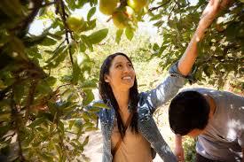 Best Pumpkin Patch In San Bernardino County by San Bernardino County San Bernardino County Tourism