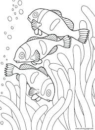 Coloring Pages Of Sea Animals Clown Fish53dd Print Download