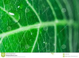 100 Natural Geometry Abstraction Stock Photo Image Of Beauty