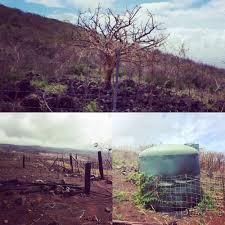 Kohala Pumpkin Patch 2012 by Kahikinui Fire 2016 Post Burn Site Visit With Lhwrp U2014 Hawaii