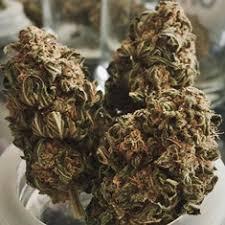 Northern Lights Cannabis Strain Information CannaSOS