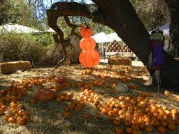 Ramona Pumpkin Patch by Pumpkin Patch