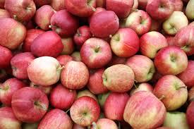 Best Pumpkin Apple Picking Long Island Ny by Where To Go Apple Picking In America The 10 Best Places To Enjoy