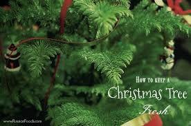 Aspirin Keep Christmas Trees Alive by Keep A Christmas Tree Fresh Until New Year