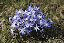 flowering bulbs to plant on your acreage