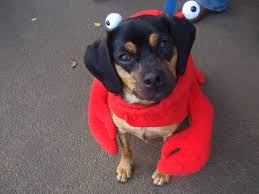 Westbury Gardens Halloween 2017 by 21 Dog Halloween Costume Ideas Including But Not Limited To The