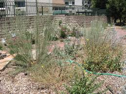 Mother Nature s Backyard A Water wise Garden Understanding Mulches