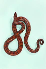 Snake Skin Shedding Lucky by 24 Best U2022 Snake U0026 Scales U2022 Images On Pinterest Amphibians