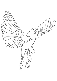 Fast flying dove coloring page
