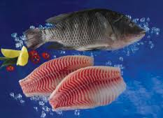 Tilapia Scientific Names Oreochromis Mossambicus O Niloticus Aureus Common Name Black Or Nile Blue Method Of Harvest