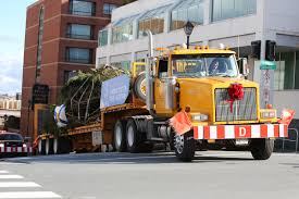 Christmas Tree Species Canada by Q U0026a The Truck Driver Who Transports The Common U0027s Tree