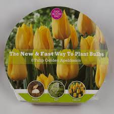 tulip bulbs for sale nature nursery