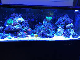 Dmitri's RSM 650, 3 Island Aquascape | Reef Sanctuary Home Design Aquascaping Aquarium Designs Aquascape Simple And Effective Guide On Reef Aquascaping News Reef Builders Pin By Dwells Saltwater Tank Pinterest Aquariums Quick Update New Aquascape Of The 120 Youtube Large Custom Living Coral Nyc Live Rock Set Up Idea Fish For How To A Aquarium New 30g Cube General Discussion Nanoreefcom Rockscape Drill Cement Your Gmacreef Minimalist 2reef Forum