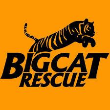 Daniel Tiger Pumpkin by Big Cat Rescue Youtube