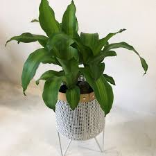 Good To Grow Fighting The Winter Blues With Indoor Plants