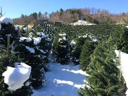 Christmas Tree Farms In Boone Nc by Research Explores Effects Of A Warming Climate On The Region U0027s