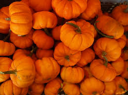 Connecticut Field Pumpkin For Pies by Connecticut Field Pumpkin Types Of Pumpkins Popsugar Home Photo 5