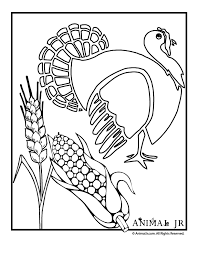 Turkey Coloring Page With Wheat Corn