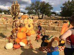 Griffin Farms Pumpkin Patch by Southern Pumpkin Patches You Have To Visit This Fall
