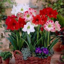 winter free shipping flower bulbs garden plants flowers