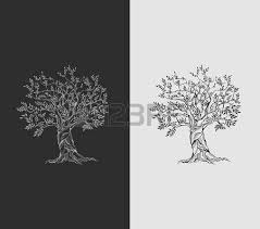 Olive Tree Vintage Paper Royalty Free Cliparts Vectors And Stock Illustration Image