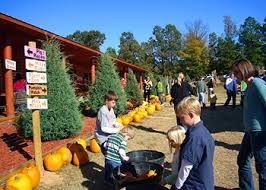 Hillcrest Farms Pumpkin Patch by Central Arkansas U0027 Favorite Pumpkin Patch And Christmas Tree Farm