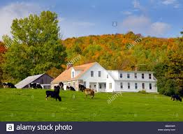 Dairy Cows Grazing In A Pasture With Dairy Barns And Fall Foliage ... Xlentcrap Barns Flowers Stuff 2009 In Vermont The Fall Stock Photo Royalty Free Image A New England Barn Fall Foliage Sigh Farms And Fecyrmbarnactorewmailpouchfallfoliagetrees Is A Perfect Time For Drive To See National Barn Five Converted Rent This Itll Make You See Red Or Not Warming Could Dull Tree Dairy Cows Grazing Pasture With Dairy Barns Michigan Churches Mills Covered Mike Of Nipmoose Engagement Beauty Pa Leela Fish Rustic Winter Scene Themes Summer Houses Decorations