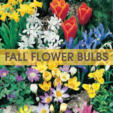 fall flower bulb fundraiser tom wat fundraising