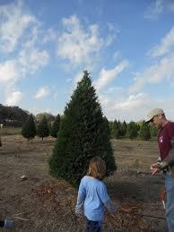 Leyland Cypress Christmas Tree Growers by Devine Acres Pancakes With Santa U0026 Christmas Tree Farm