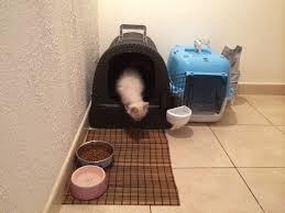 avis sur maison de toilette pour chat anthracite aspect rotin
