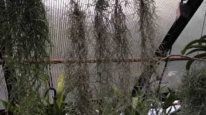 Best Plant For Bathroom Australia by Air Plant Care Must Know Spanish Moss Care And Culture Tips For