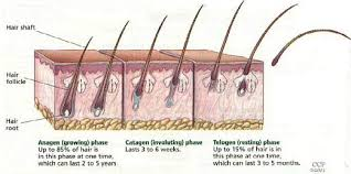 excessive hair shedding causes hair disorders