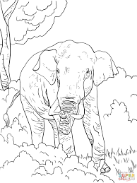Click The Indian Elephant Coloring Pages