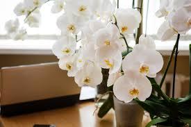 orchideen hängend