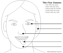 5 Senses Colouring Pictures Five Coloring Pages My