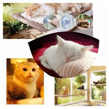 Indoor Hammock Bed by Online Get Cheap Wall Cat Bed Aliexpress Com Alibaba Group