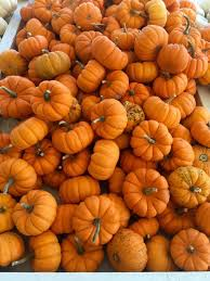 Pumpkin Patch Columbus Ga by The 7 Best Pumpkin Patches Near Nashville In 2016